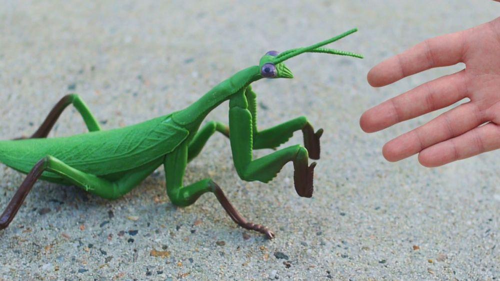 Hiiiy, Ini Dia Serangga-Serangga Terbesar di Muka Bumi