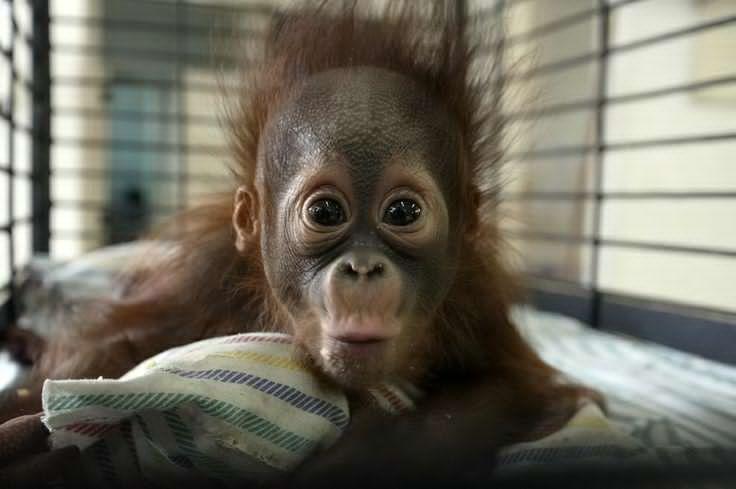 Pengen Tau Foto-Foto Bayi Hewan Ini Saat Masih dalam Bentuk Janin, Liat Ini!