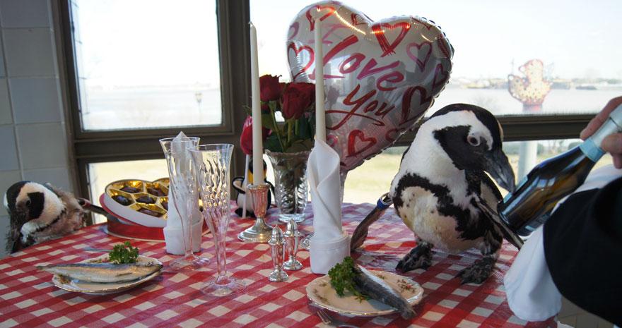 Hewan-Hewan Romantis Ini Bakal Bikin Kamu Baper Loh