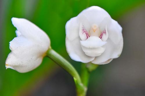 Wah, Ini Dia Bunga yang Cantik Tapi Aneh!