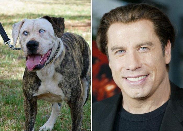 John Travolta vs Anjing