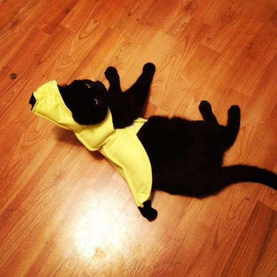 Ini Dia Ekspresi Kocak Kucing yang Nggak Suka Kostum Halloween-nya