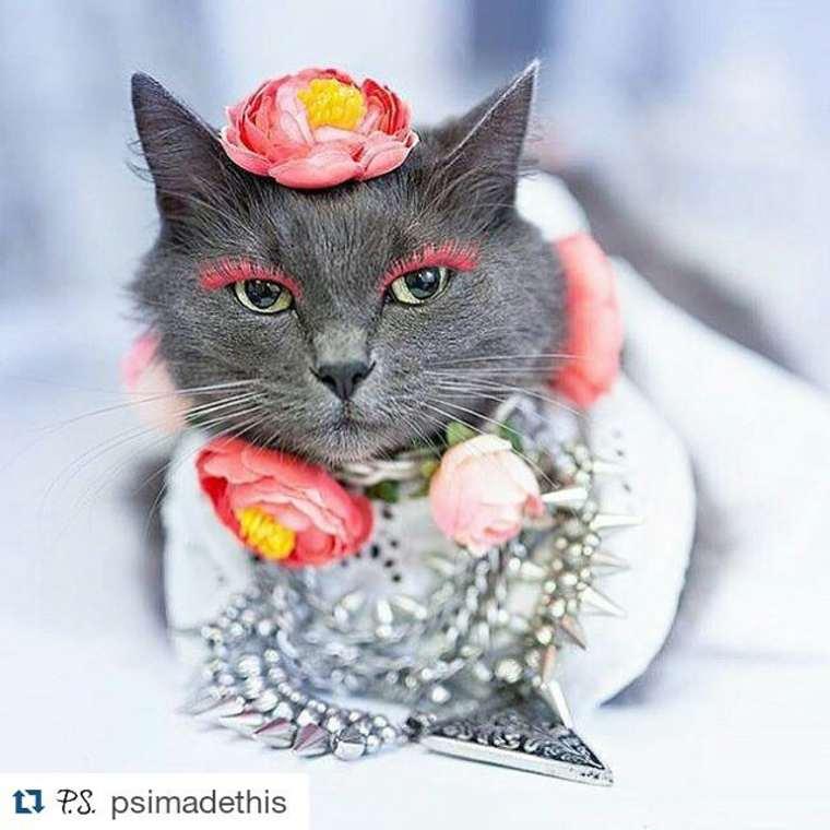 Yuk, Ketemu Si Kucing Paling Glamour di Seluruh Dunia!
