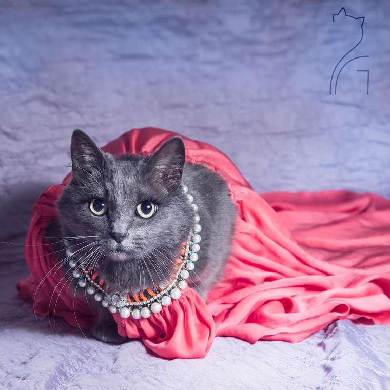 Yuk Ketemu Si Kucing Paling Glamour Di Seluruh Dunia