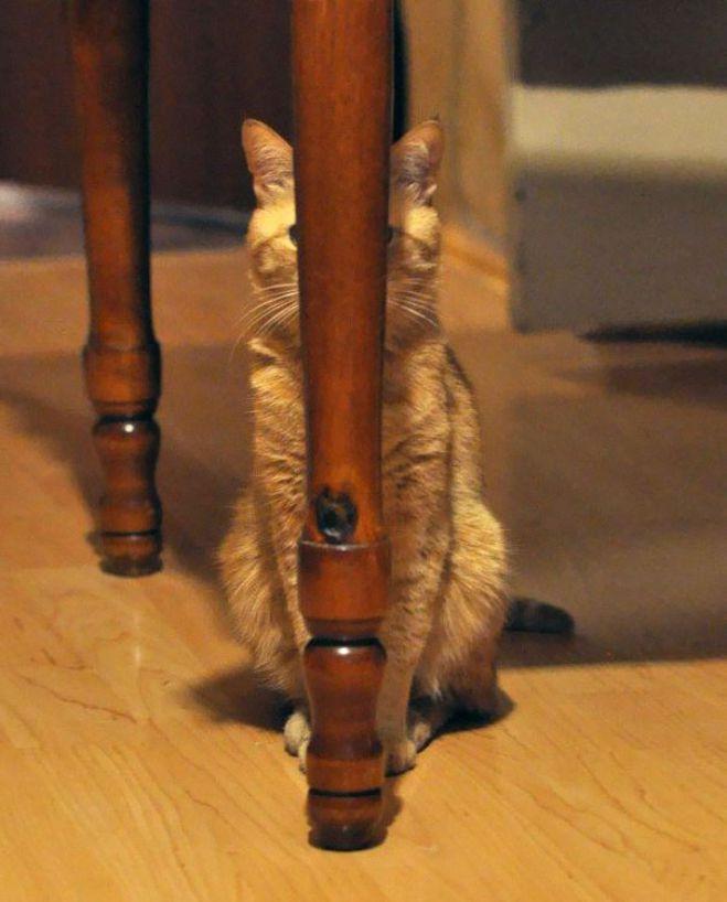Lucunya, Kucing-Kucing Ini Punya Kemampuan Bak Ninja Loh!