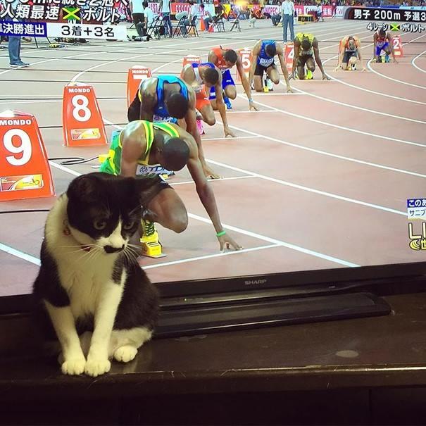 Beginilah Ketika Foto-Foto Kucing Ini Diambil Pada Saat Yang Tepat, Lucu!