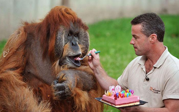 Hewan-Hewan Ini Punya Pesta Ulang Tahun Lebih Seru dari Kamu Loh!
