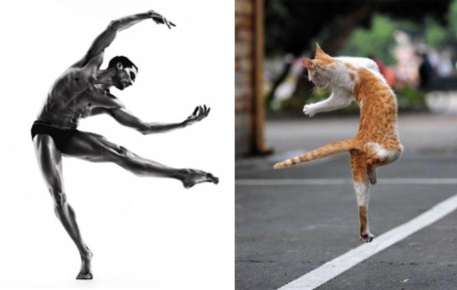Lucunya, Kucing-Kucing Ini Berpose ala Model