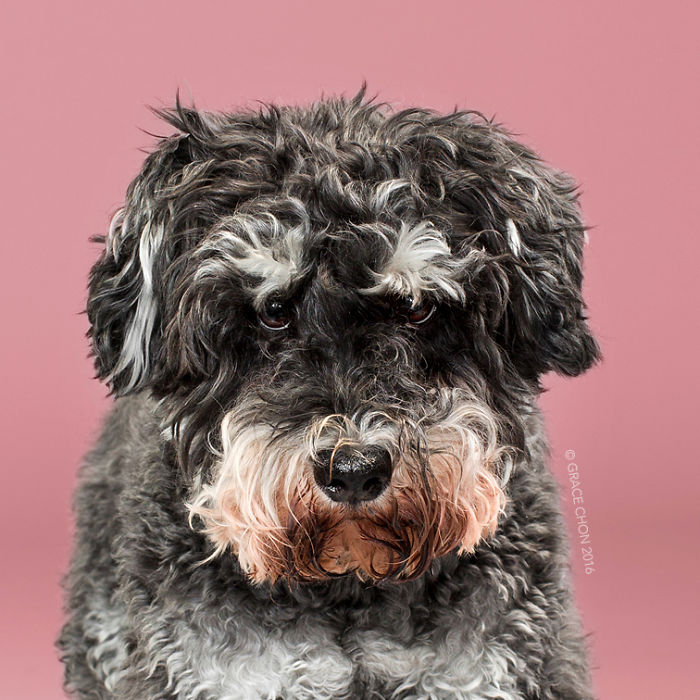 Aww, Lucunya Foto Make Over Anjing-Anjing Ini Setelah Nyalon