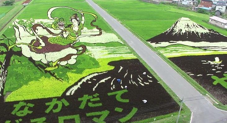 Di Jepang, Sawah Bisa Jadi Lukisan Sekeren Ini Loh!