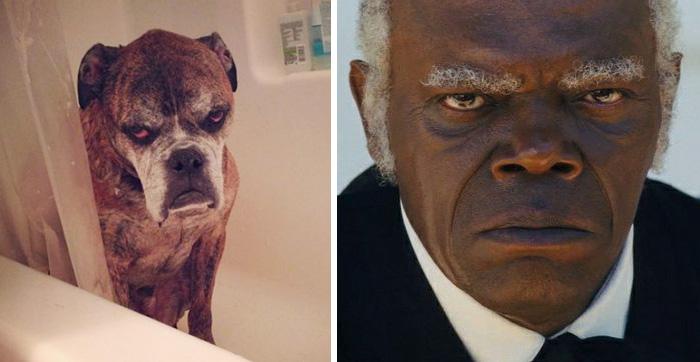 Samuel L. Jackson vs Anjing