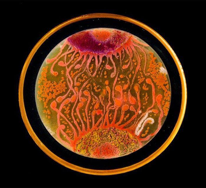 Seni dengan Mikroba Ini Bakal Buat Kamu Kagum