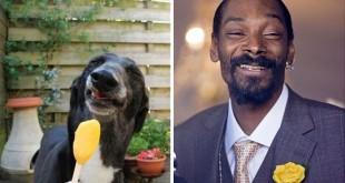 Snoop Dogg vs Anjing