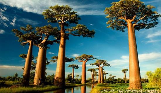 Kita Lihat Nih Pohon-Pohon Paling Menakjubkan dari Seluruh Dunia