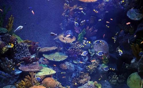 Yuk Lihat Akuarium Paling Megah Sepanjang Sejarah Dunia!