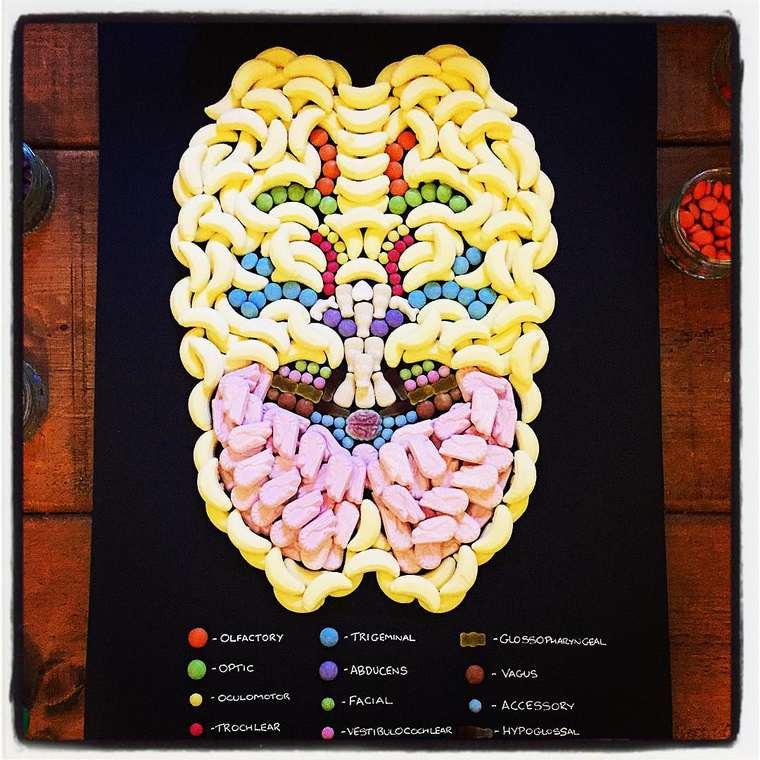 Yuk Belajar Anatomi Manusia dengan Permen!