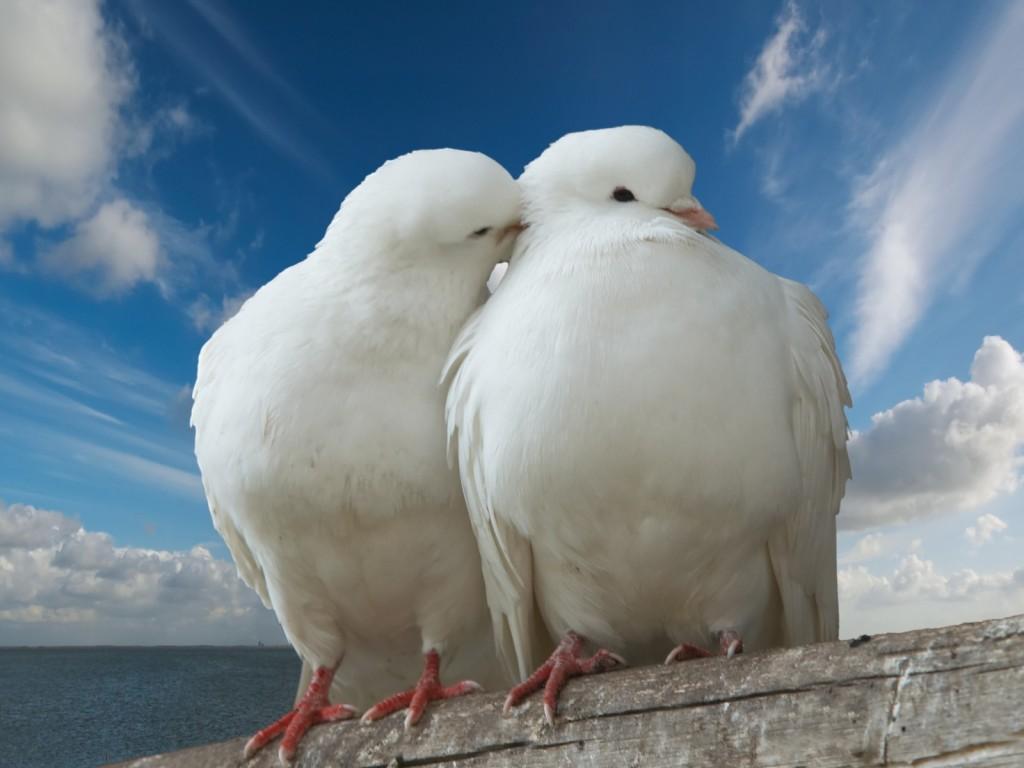 Makna Gambar Burung Di Dalam Kehidupan