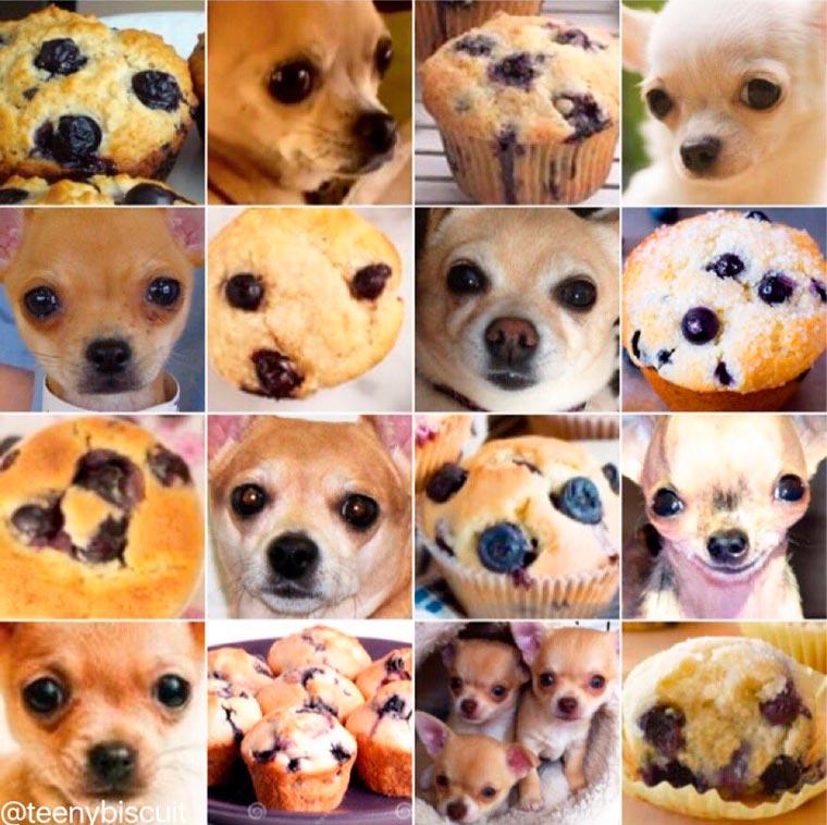 Hewan atau Makanan Ya? Coba Kita Lihat Yuk!