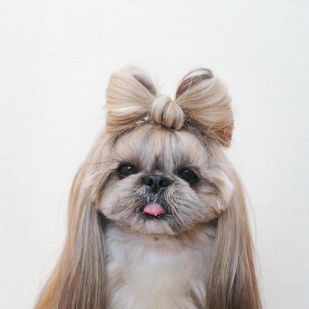 Anjing Lucu Ini Punya Gaya 'Rambut' Berbeda Setiap Hari