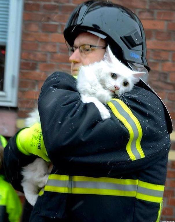 Mereka Ini Rela Mengorbankan Nyawa Loh Demi Menyelamatkan Para Hewan