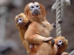 Foto Gambar Binatang Lucu yang Unik dan Ngegemesin