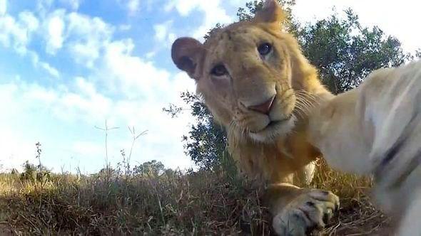 Lucu, Ekspresi Hewan-Hewan Ini Saat Selfie Bakal Buat Kamu Ketawa