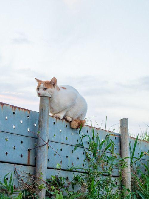 Download 64+  Gambar Kucing Animasi Bergerak Lucu Terbaik Gratis