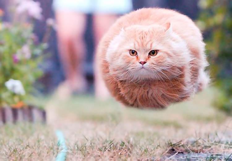 Aksi Konyol Kucing-Kucing Ini Bakal Bikin Kamu Ketawa!