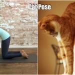 Lucu, Binatang Ini Bisa Yoga Juga Loh!