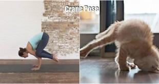 pose yoga binatang 18