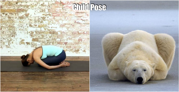 pose yoga binatang 3